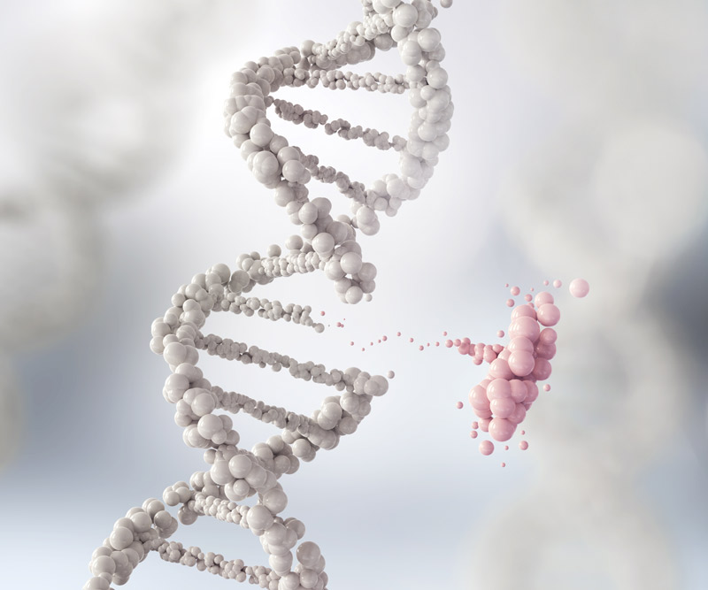 a white strand of DNA with part of the helix removed and highlighted in pink