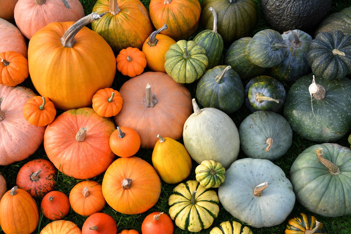 13 Pumpkin Recipes Perfect for Fall