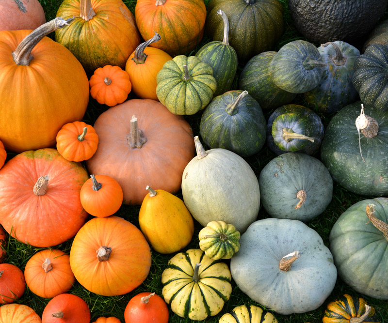 different varieties of pumpkins of different sizes, shapes and colors grouped together