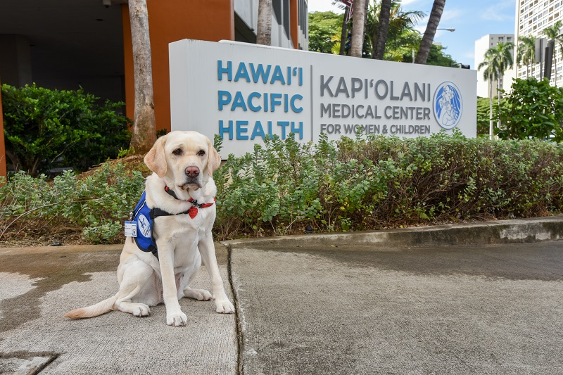 Ruby on sidewalk in front of Kapiolani sign