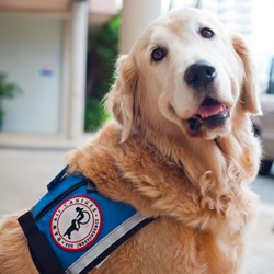 Tucker worked full time as Kapiolani's facility dog and Chief Canine Officer for nearly a decade.